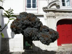 Mon petit nuage à Lisbonne !