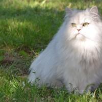 La pilule contraceptive pour chat est mortelle