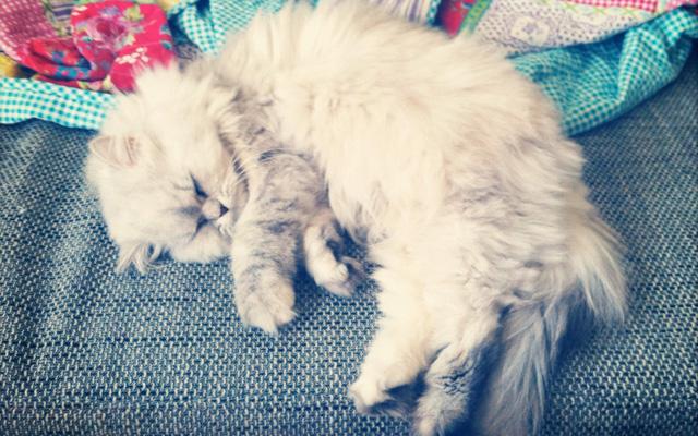 Mon chat d'amour