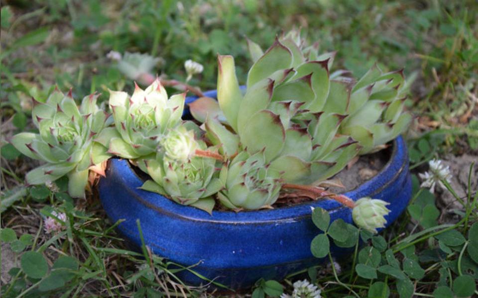Le jardin de ma mère