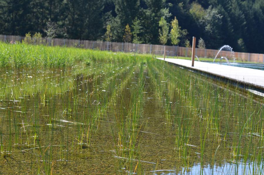 La piscine biologique du lac des sapins