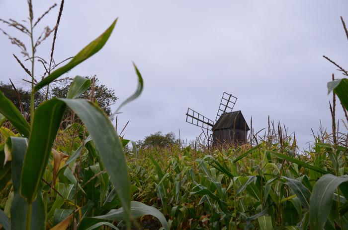 Un moulin dans un labyrinthe de maïs sur l'île d'Oland