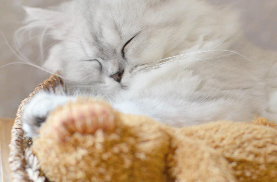 Moi vouloir etre chat