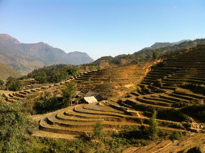 Rizière à Sapa - Road trip au Vietnam