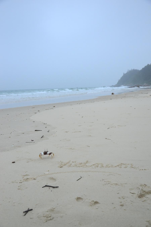 Croisière dans la baie de Bai Tu Long - île Van Don