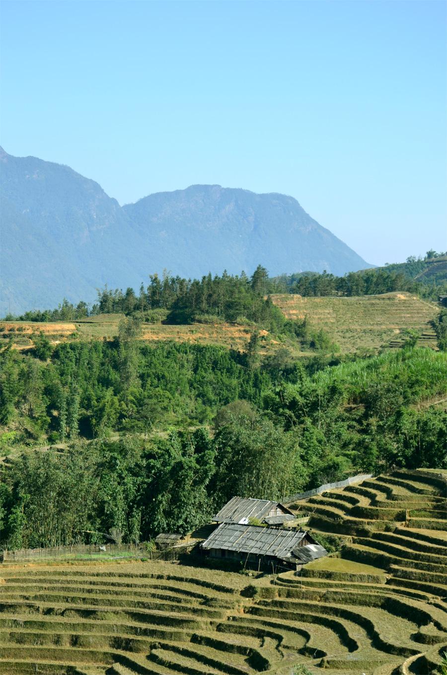 Voyage au Vietnam : trek dans les montagnes et rizières aux alentours de Sapa