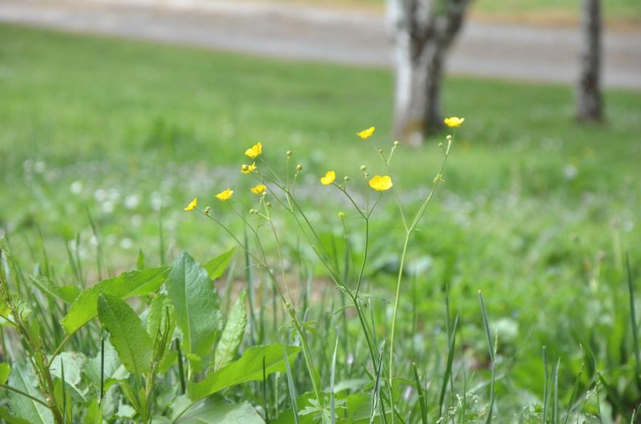 L'arrivée tardive du printemps
