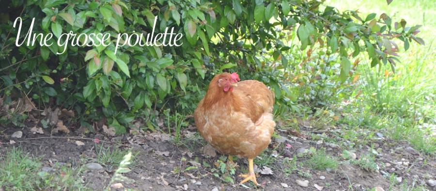 La grosse poulette