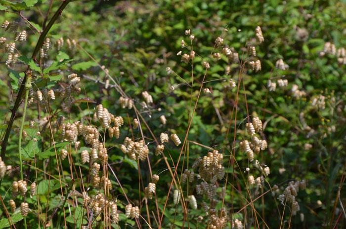 Réserve naturelle du courant d'Huchet - Landes - Flore
