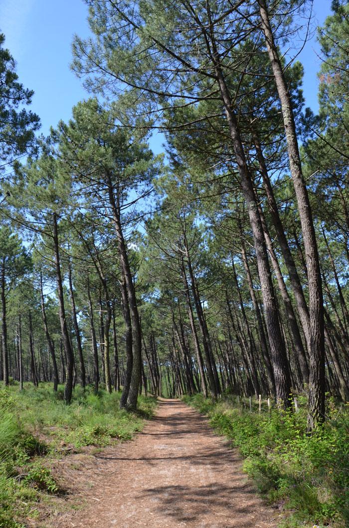 Réserve naturelle du courant d'Huchet - Landes - Forêt de pins