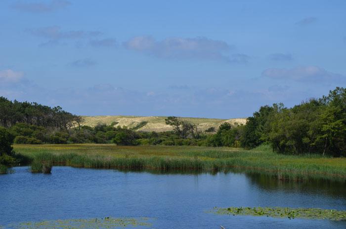 Marais de la pipe : Réserve naturelle du courant d'Huchet - Landes