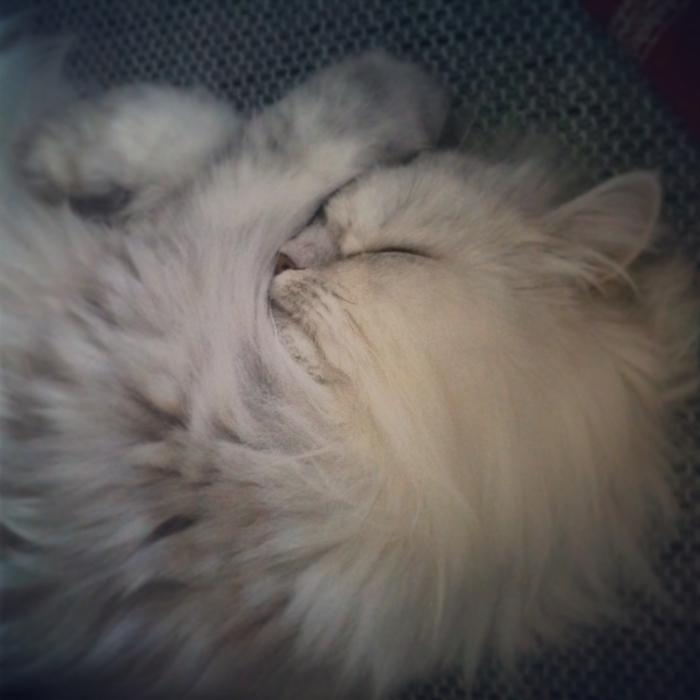 La vie de chat