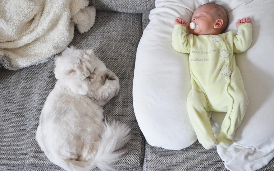 Bébé dort sur le coussin de maternité