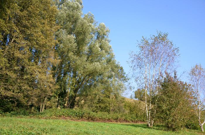 automne-24