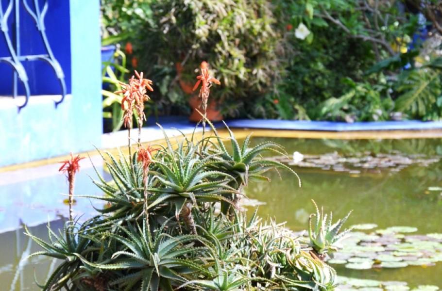 le jardin majorelle marrakech blog voyage