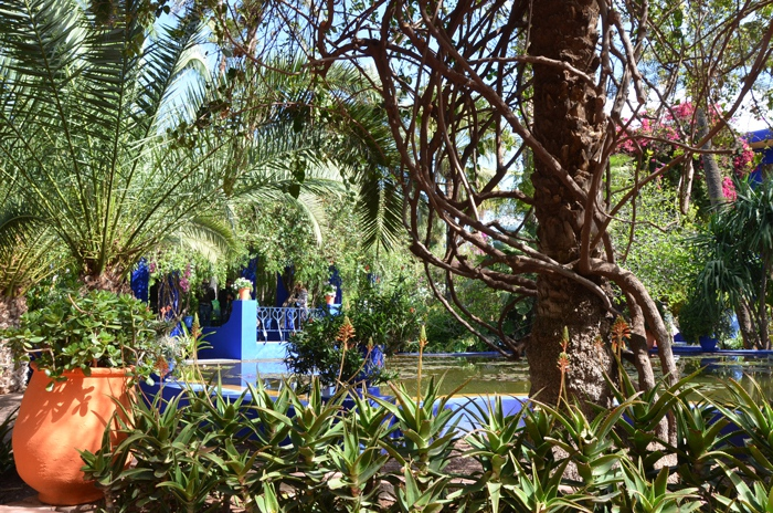 le jardin majorelle marrakech blog voyage. Black Bedroom Furniture Sets. Home Design Ideas