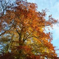 🍂  L'automne au parc de la Tête d'Or 🍂