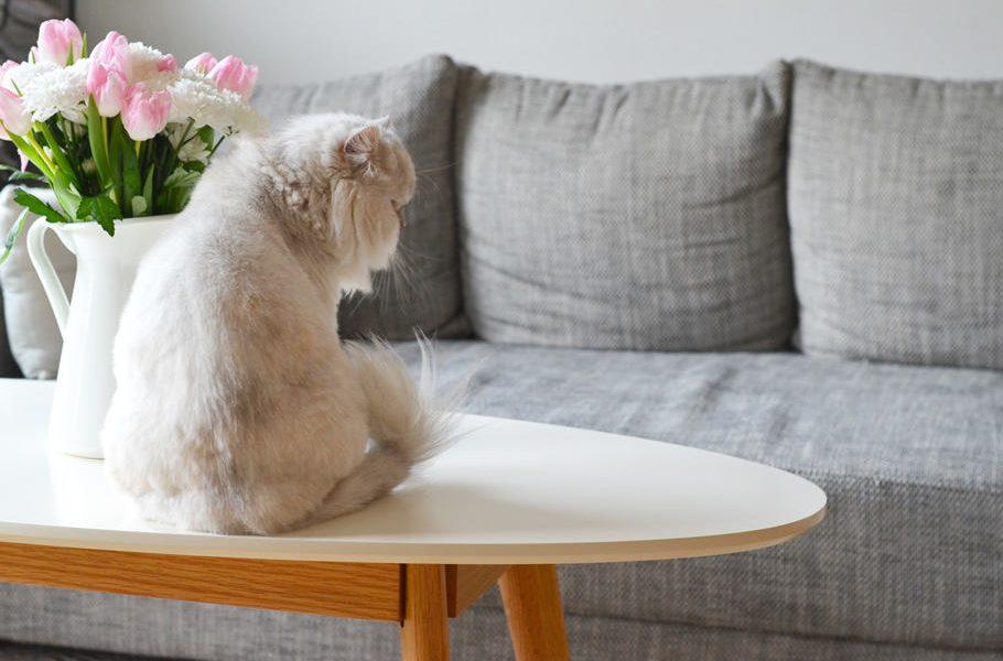 La nouvelle table basse scandinave