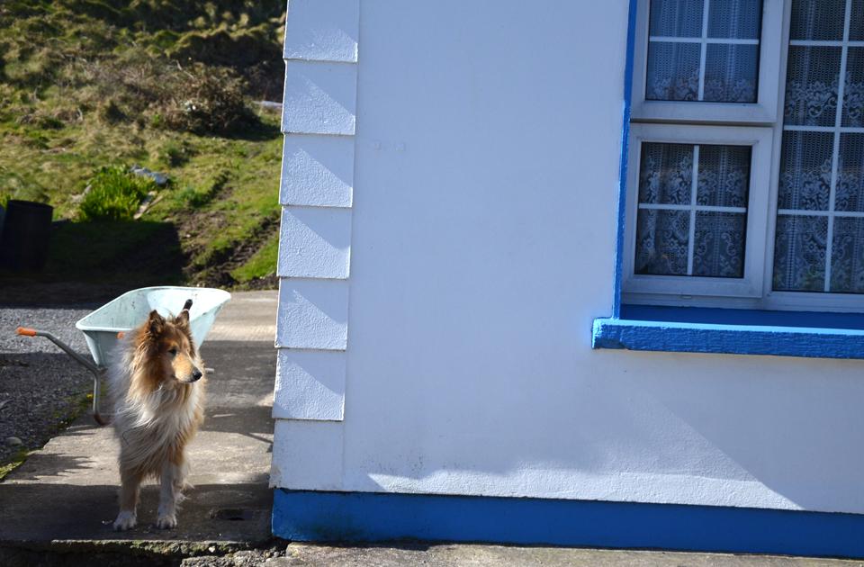 La vie paisible sur Clare Island