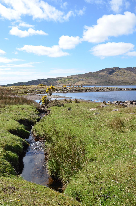 La nature sauvage en Irlande