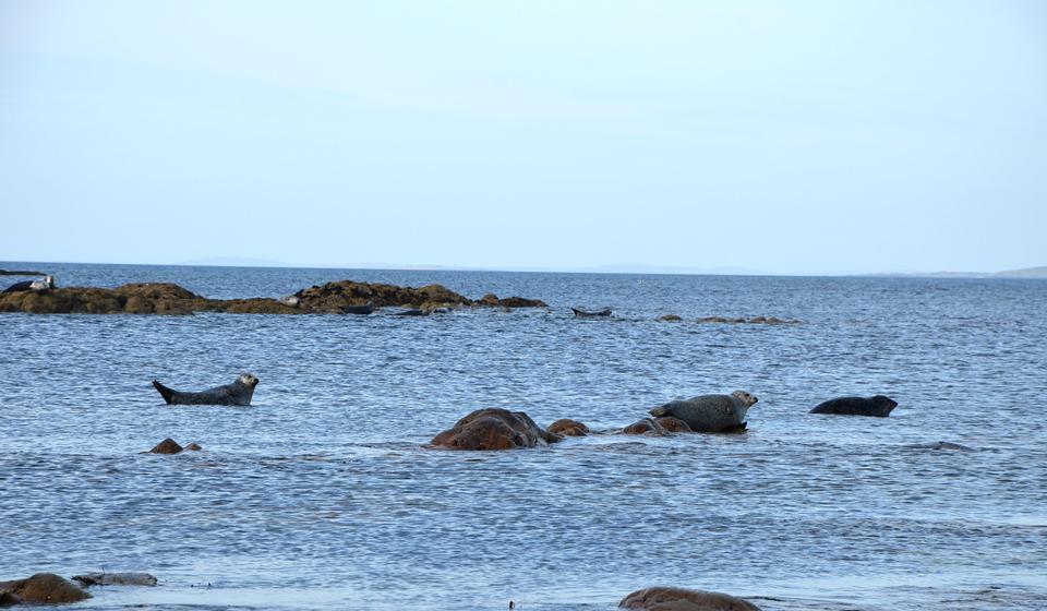 L'Irlande hors des sentiers battus : Les phoques aperçus en face de Clare Island
