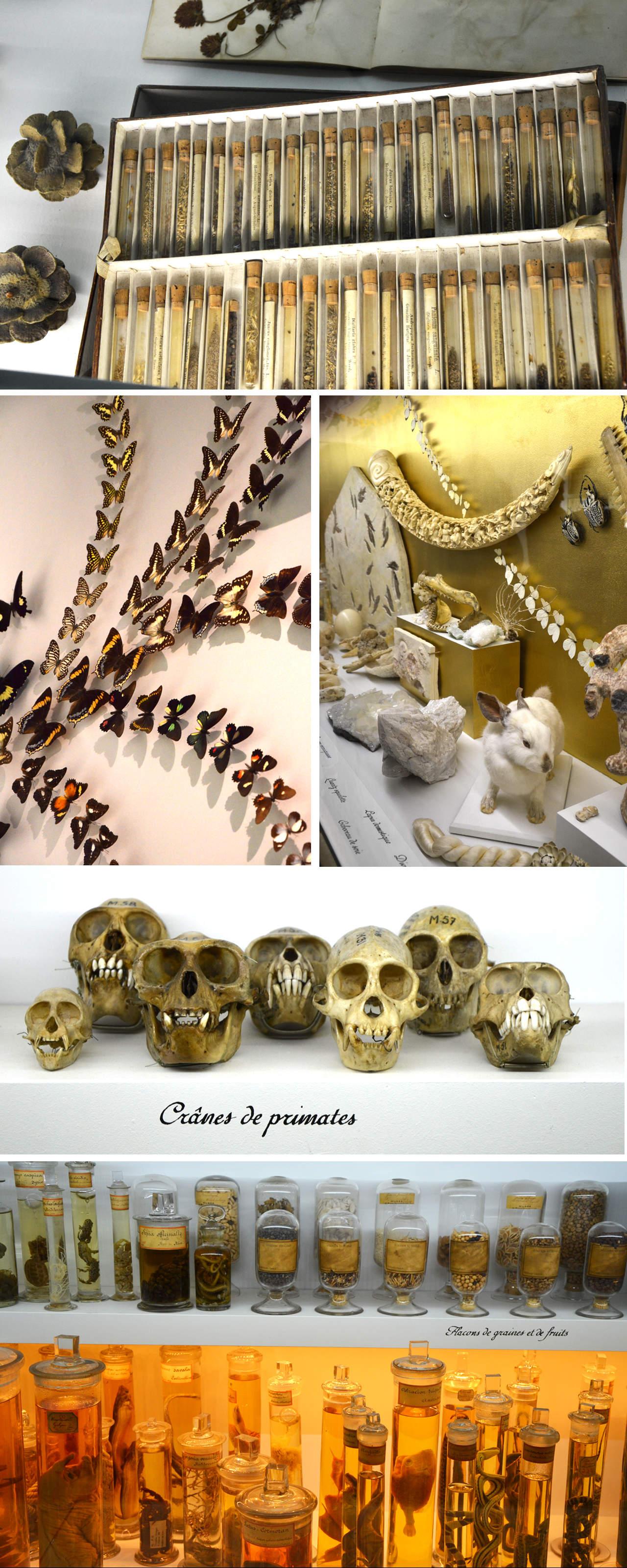 La chambre des Merveilles : Musée des Confluences