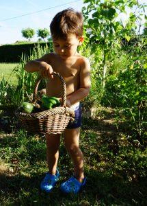 Noah dans le potager et sa cueillette de tomates