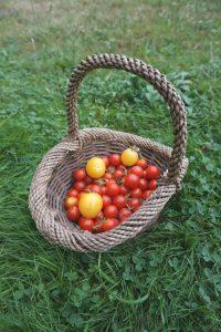 Les vacances chez mamie : la récolte de tomates cerises