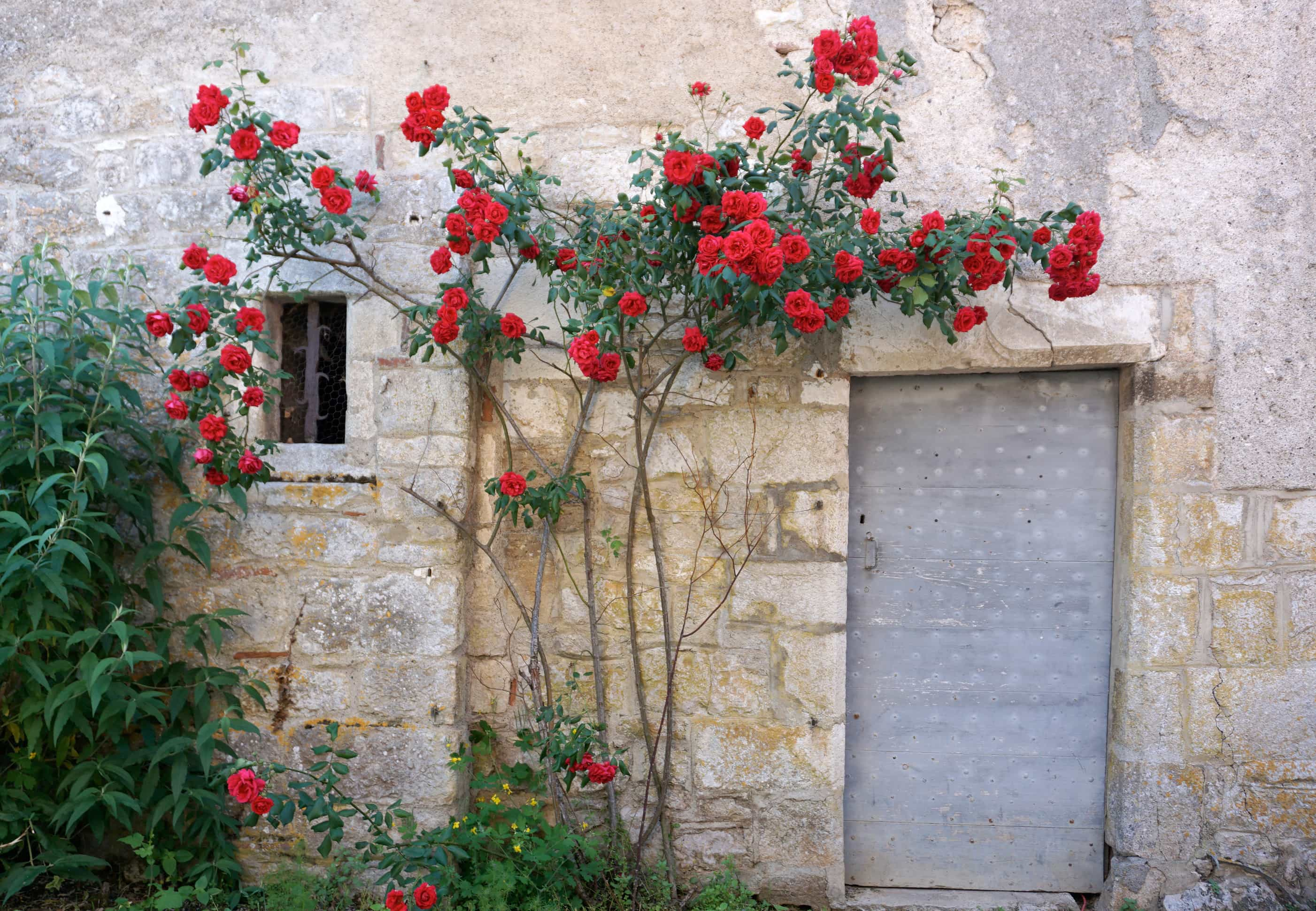 Saint cirq lapopie village france
