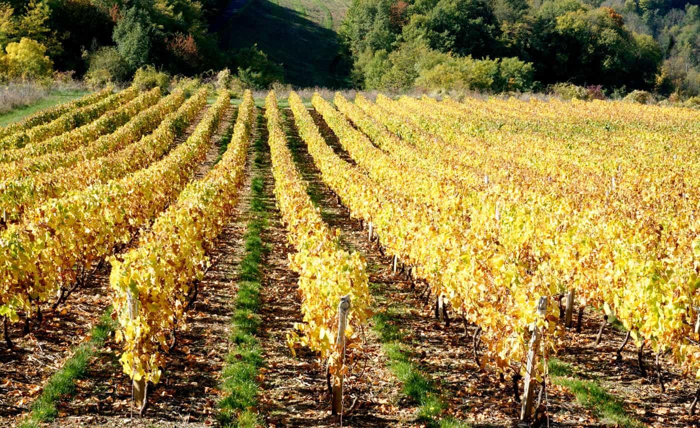 Les vignes du Beaujolais en automne
