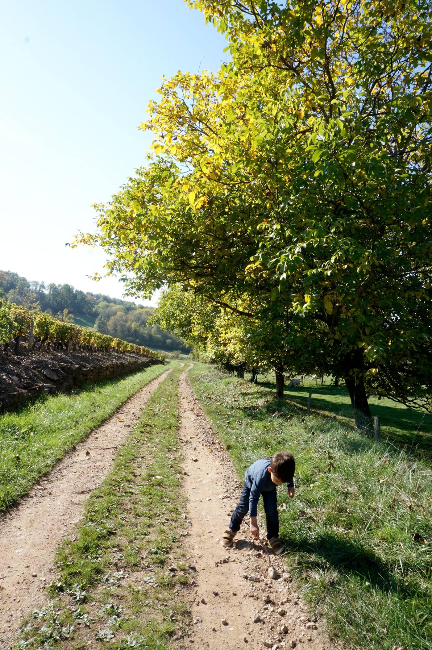 Balade autour de Lyon : le Beaujolais en automne