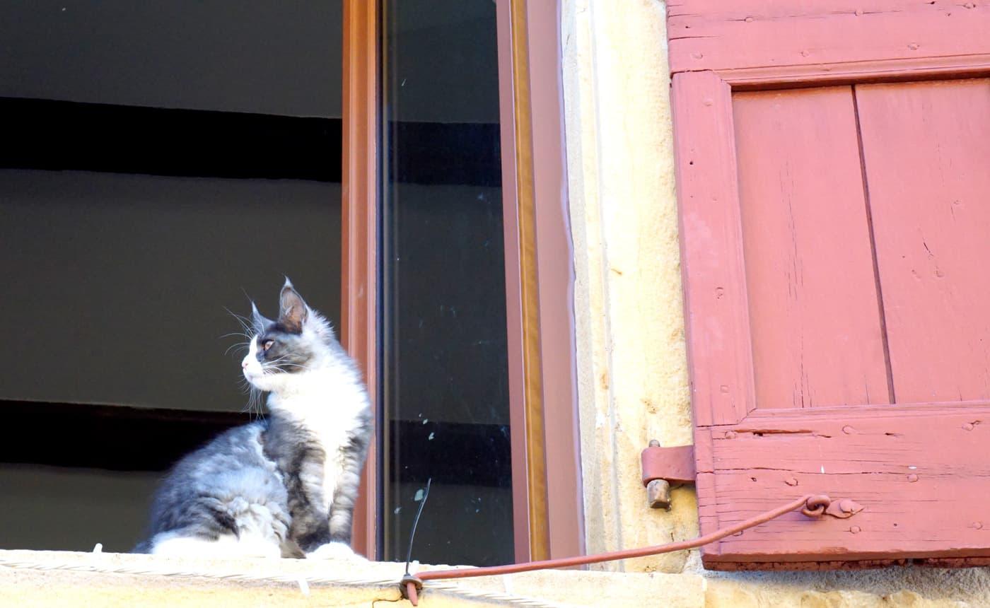 Un chat d'Oingt !