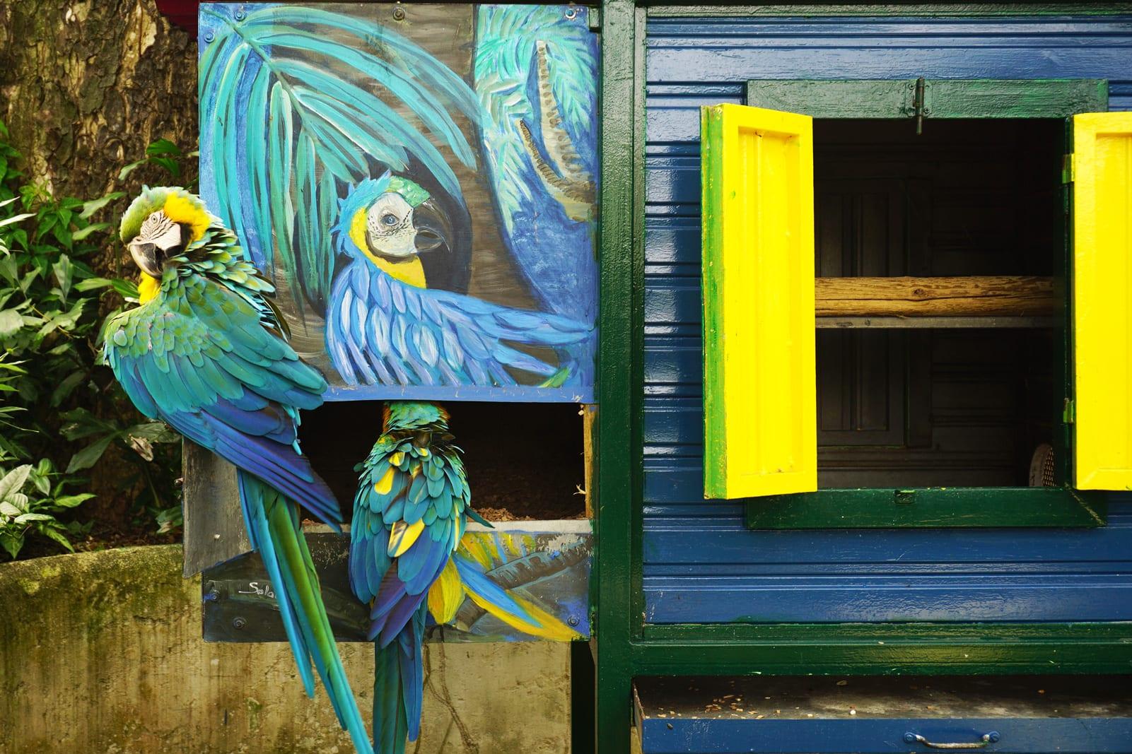 Que faire en Guadeloupe : le jardin botanique de Deshaies à Basse-Terre - Les aras bleus