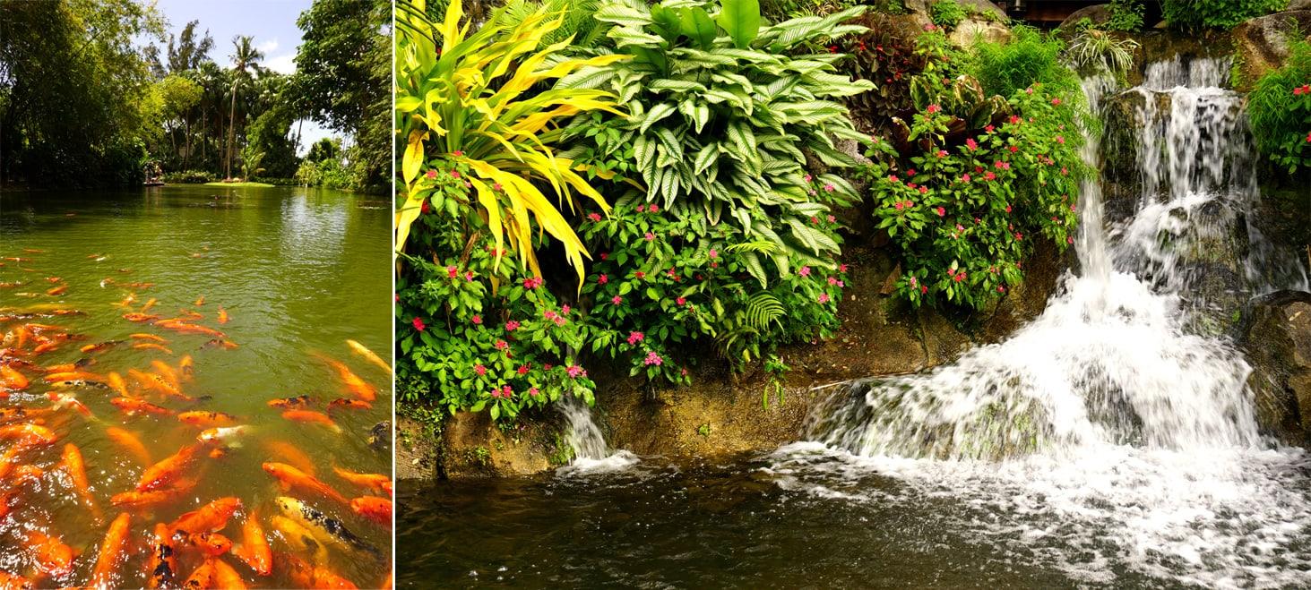 Que faire en Guadeloupe : le jardin botanique de Deshaies - L'étang aux nénuphars et la cascade