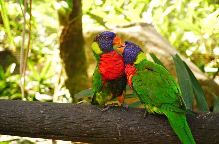Que faire en Guadeloupe : le jardin botanique de Deshaies - Les loriquets