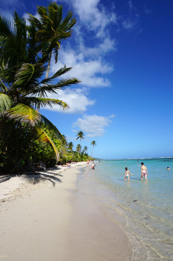 Plage cocotier guadeloupe famille