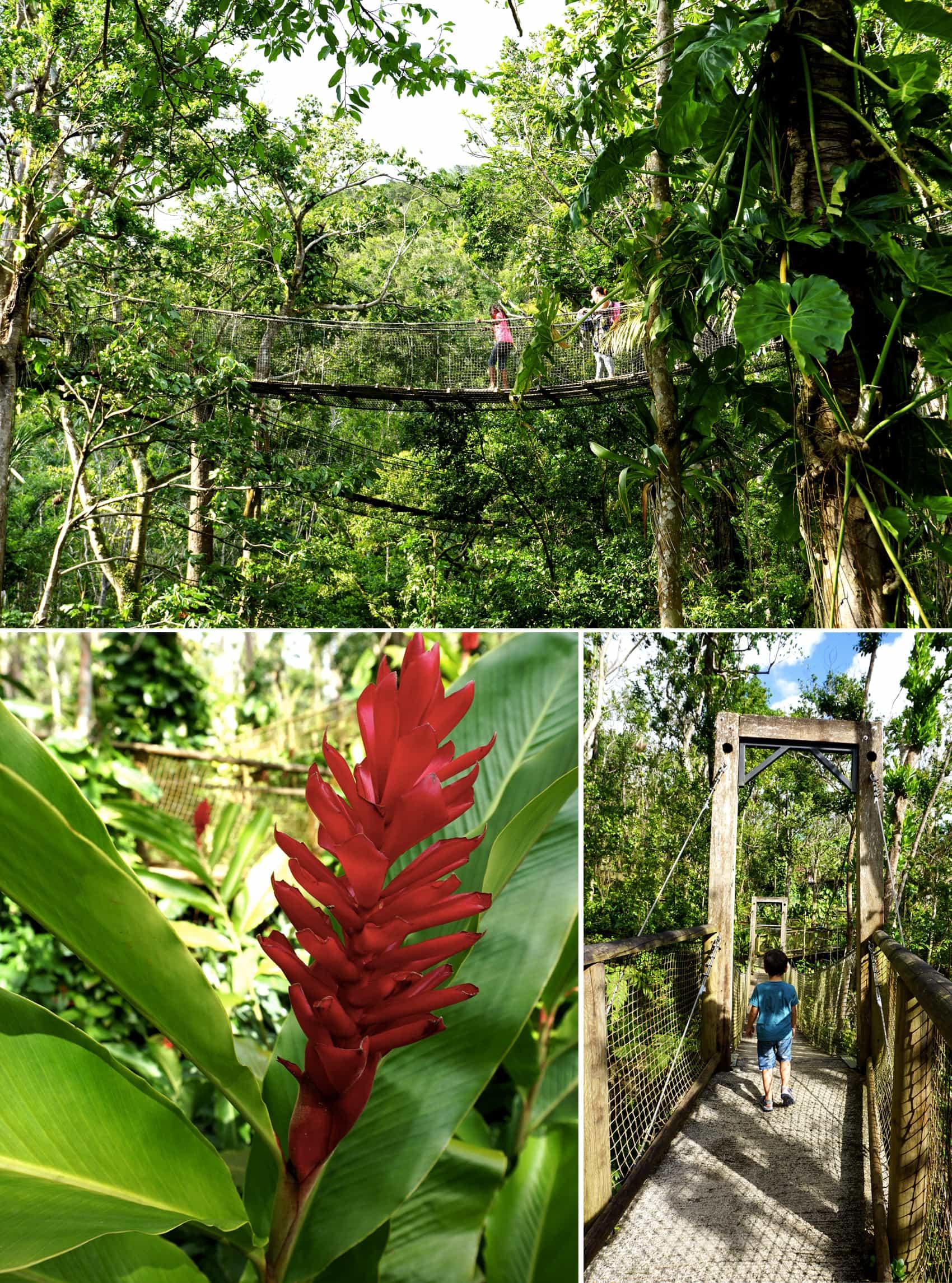 Parc des Mamelles Guadeloupe