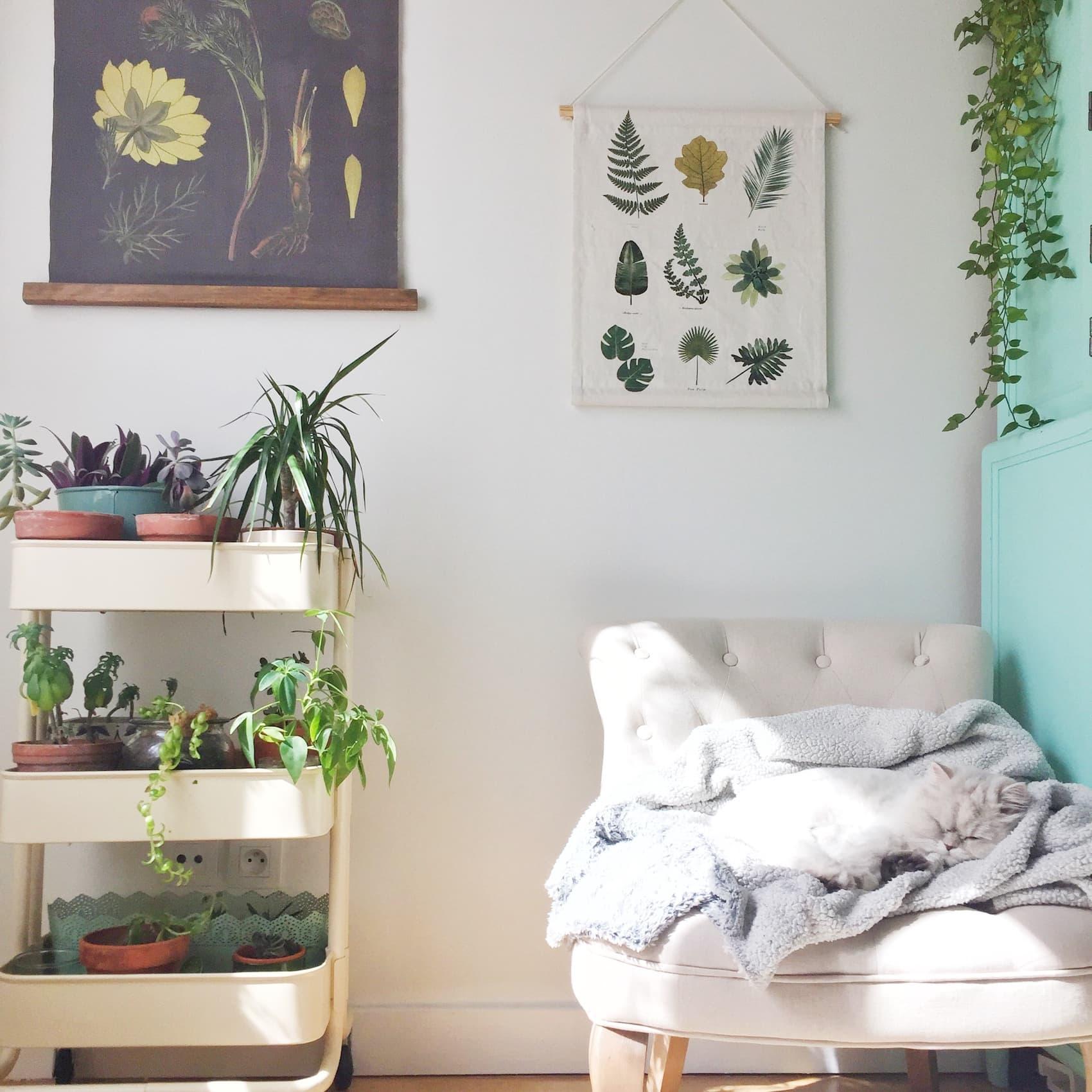 Mon lagom : mon bureau, ma déco, mes anti-stress : caresser mon chat, faire rentrer la nature et m'occuper de mes plantes vertes - Blog lifestyle