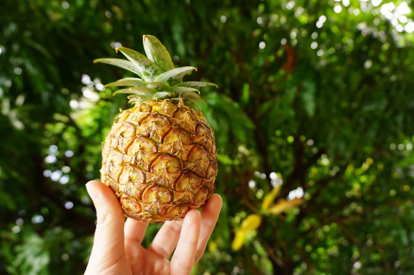 Voyage en Guadeloupe : où faire ses courses, quoi manger ?