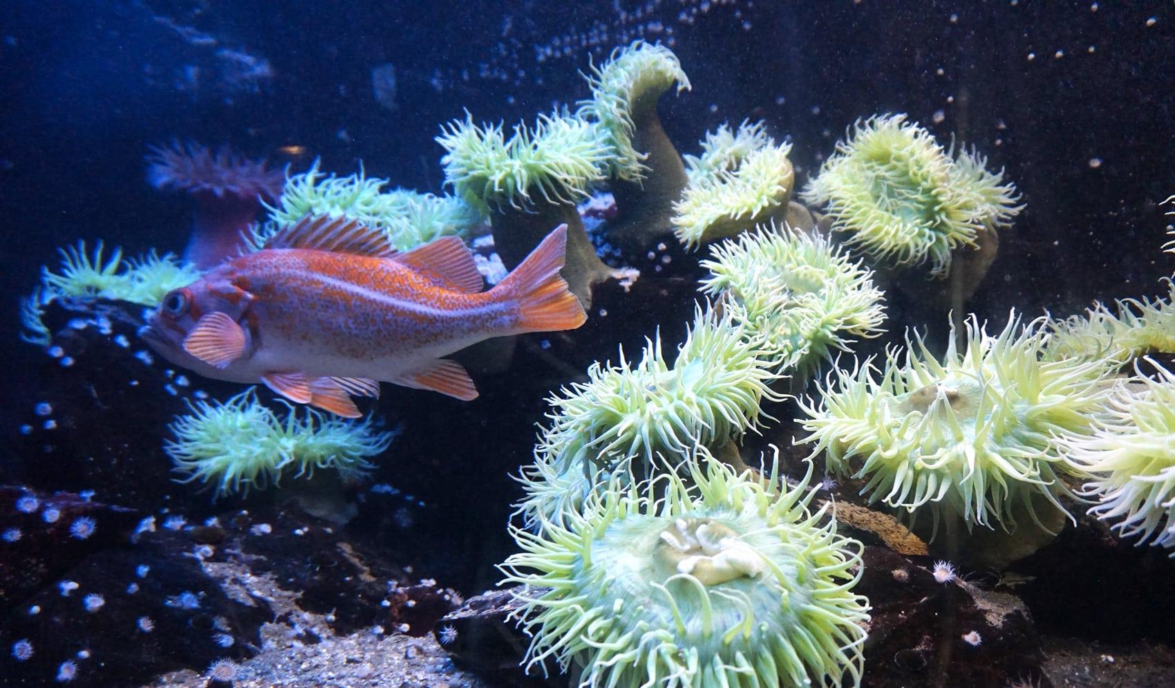 Aquarium Saint-Malo