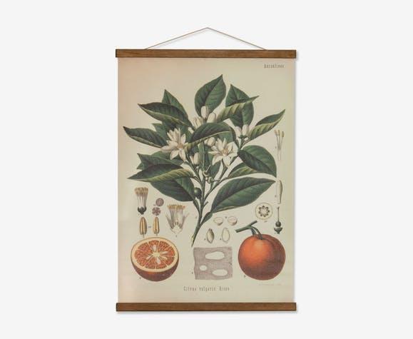 Affiche botanique original