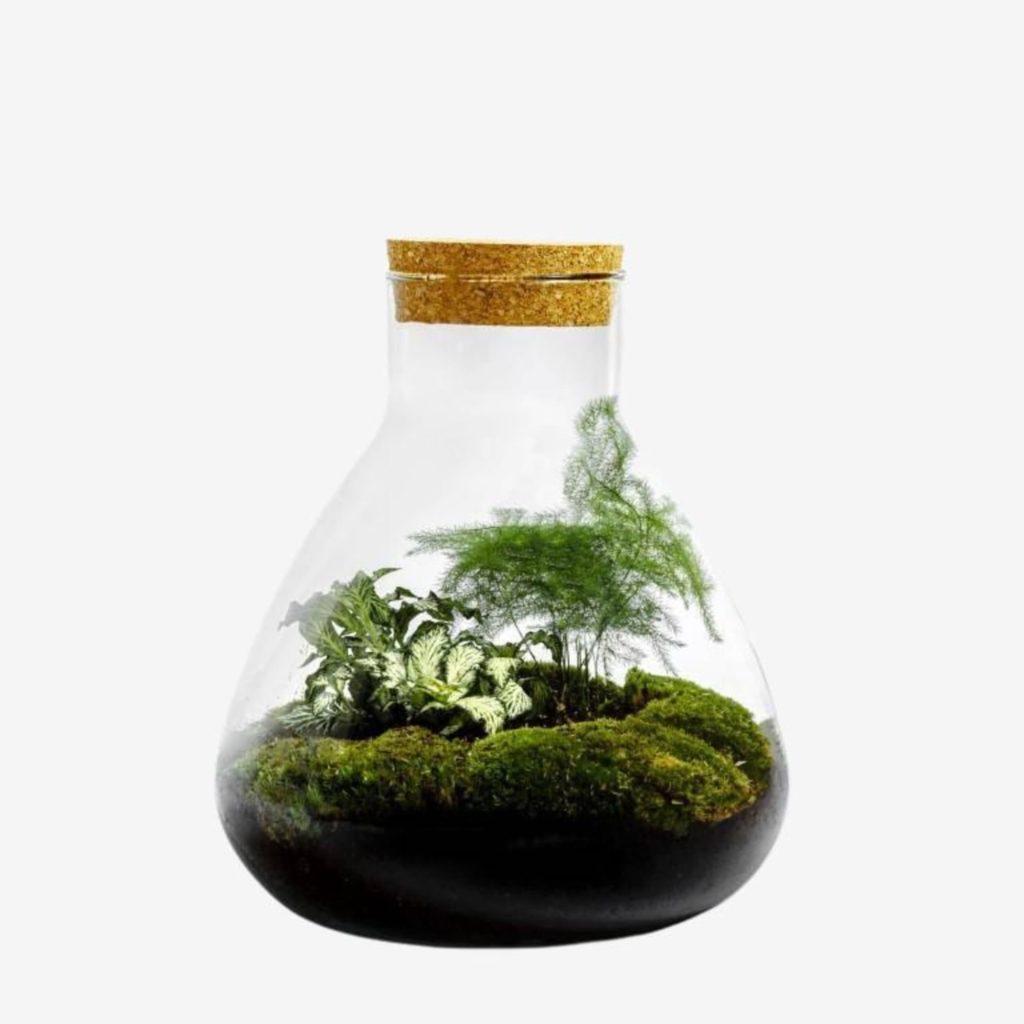idee cadeau terrarium