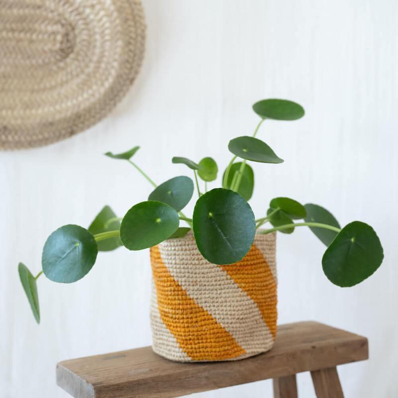 plante pilea idee cadeau